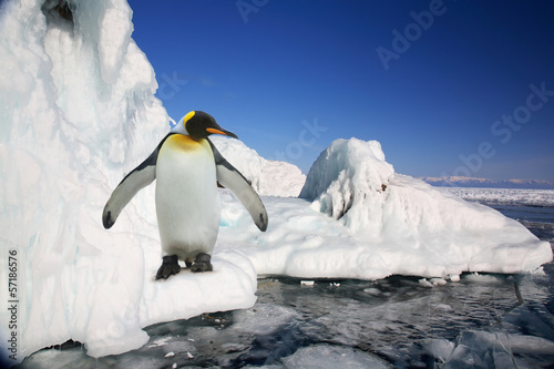 Tuinposter Pinguin Big imperial penguin on ice