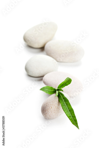 green leaf and stones