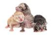 Cute new born kittens