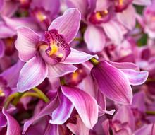 Violets bouquet d'orchidées. Motif floral.