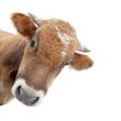 Leinwanddruck Bild - Die Kuh