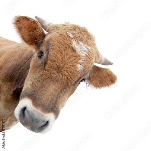 Fotobehang Koe Die Kuh