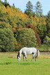 Colorful autumn Landscape with Horse
