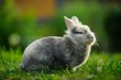 Fluffy Rabbit Outdoors on Green Lawn