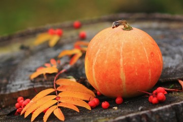 Pumpkin with fall leaves and rowanberry