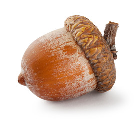 Ripe brown acorn