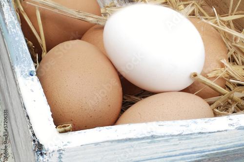 frische Hühnereier braun und weiß
