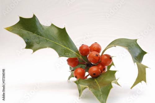 rote Beeren der Stechpalme