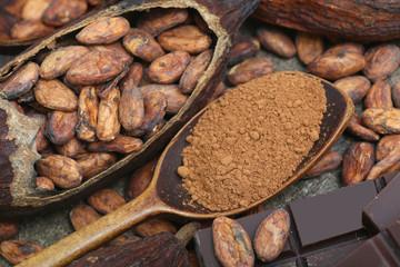 Kakaopulver mit Kakaobohnen und Schokolade