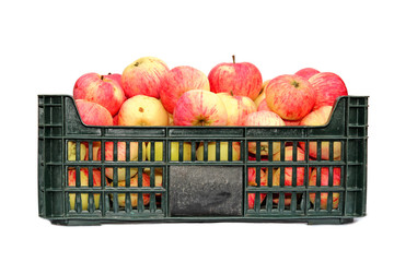 Apples in a plastic box isolated