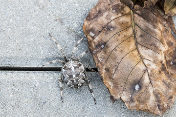 Big spider with leaf