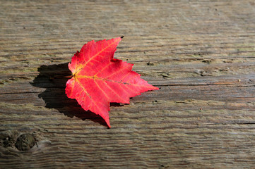 Maple leaf on the wooden plank