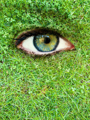 Eye in a meadow