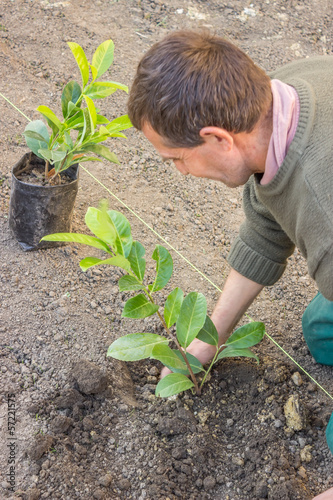 Garden worker kneels and plant 3