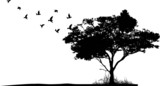 Fototapety tree silhouette with birds flying