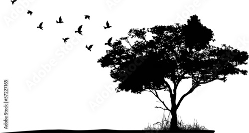tree silhouette with birds flying - 57227165