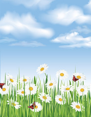 Summer background with chamomile flower field and blue sky