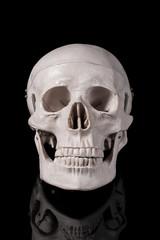 黒背景に頭蓋骨のアップ