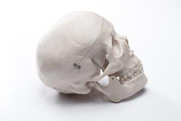 白バックに頭蓋骨