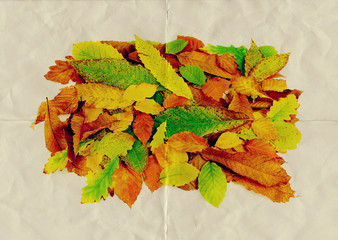 paper texture leaves