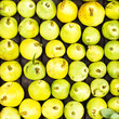 Green and yellow Pears at a famers market may use as background,