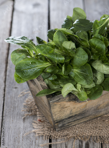 Portion of Lamb's Lettuce
