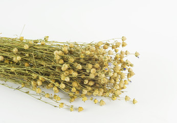 A bouquet of dried flax