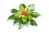 Christmas Holly (Ilex) with red berries, isolated on white