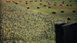 Farmers Golden Wheat Fields In The Fall-1940 Vintage 8mm film