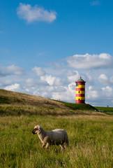 Pilsumer Leuchtturm mit Schaf