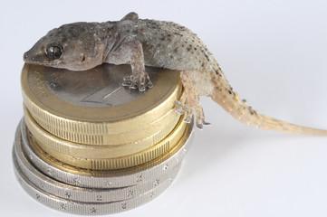 Gecko Lizard and Coin