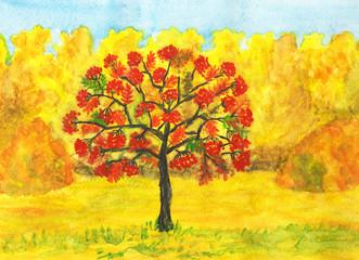 Ash tree in autumn