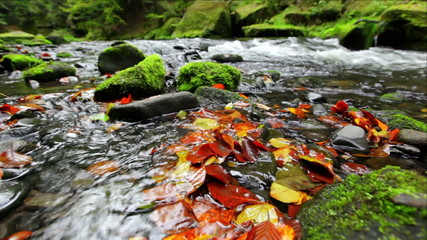 river Kamenice in autumn, Bohemian Switzerland, Czech Republic
