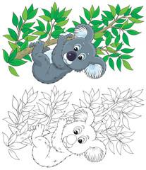 koala on an eucalyptus branch