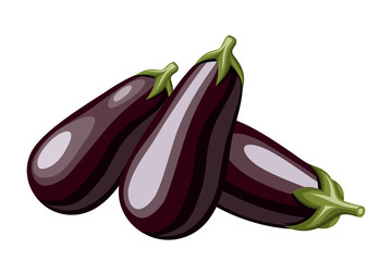 Eggplants. Vector illustration.