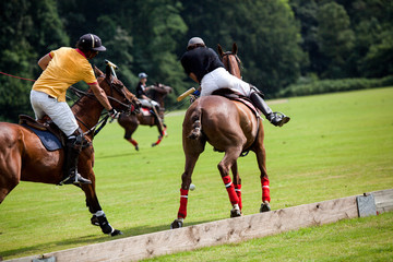 Polo horse break