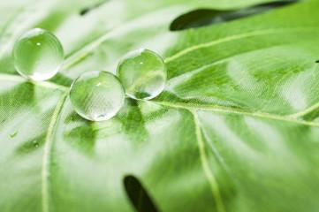 葉っぱに水