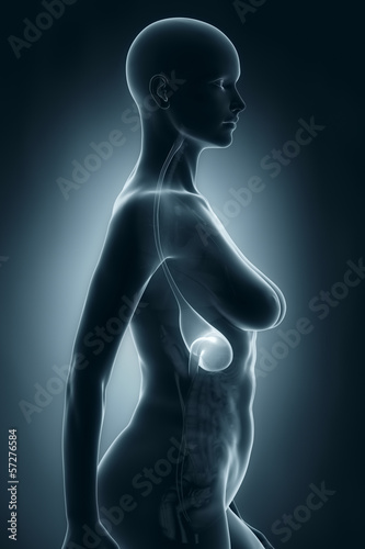 Woman stomach anatomy x-ray lateral view