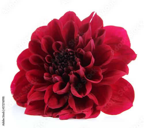Keuken foto achterwand Dahlia Dahlia flower, isolated on white