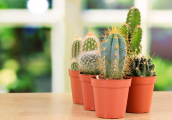 Collection of cactuses, on windowsill