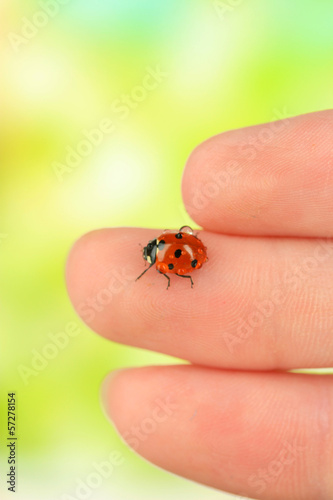 Beautiful ladybird on hand, close up