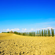 Tuscany, farmland, cypress trees and field. Siena, Val d Orcia