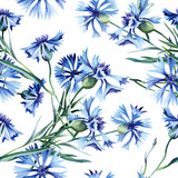 Cornflowers Seamless Pattern