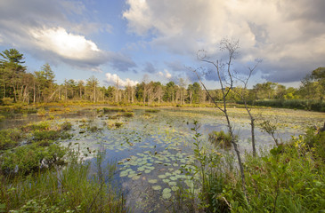 Swamp at Canoe Meadows in Pittsfield, Massachusetts