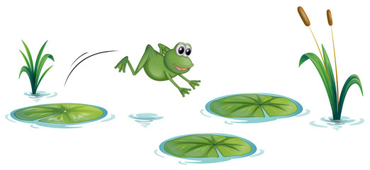 A frog at the pond with waterlilies