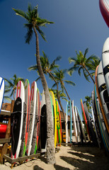 Walls of surfboards under Queen palms at Kaunaoa beach