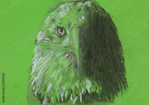 eagle head, chalk sketch