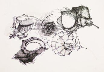 seashells ink drawing
