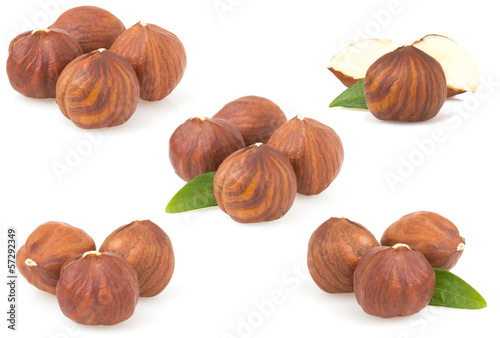 hazelnut nut on white