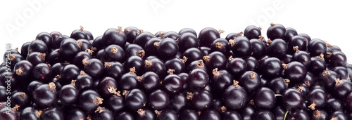 Black currant. Background